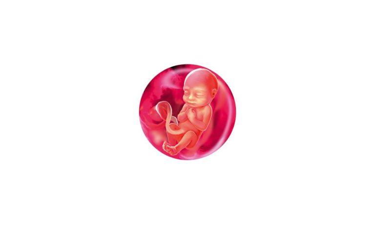 17 неделя беременности