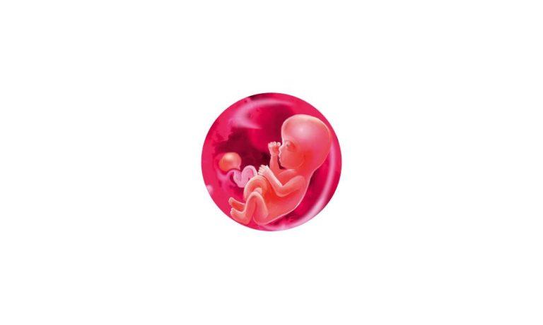 12 неделя беременности