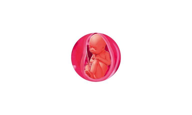 33 неделя беременности