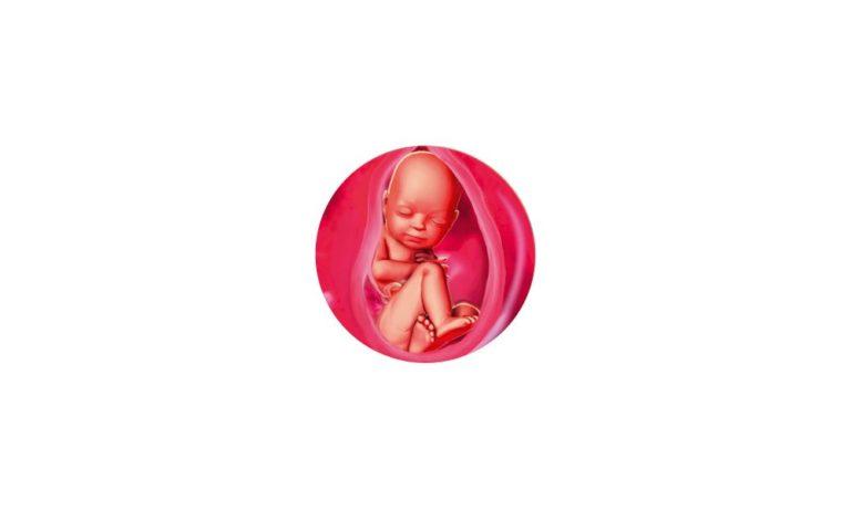 34 неделя беременности