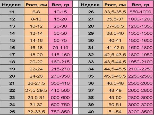 Таблица нормы фетометрии плода по неделям, Идеальная Я