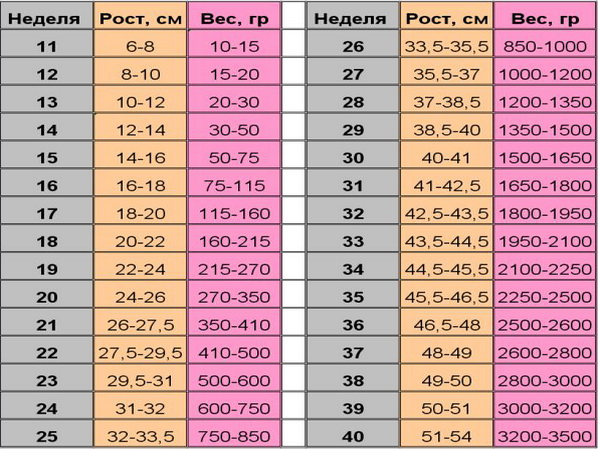 Таблица нормы фетометрии плода по неделям вес рост