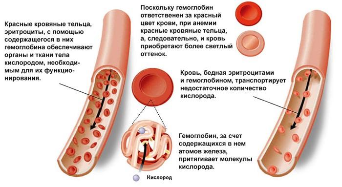 Низкий гемоглабин у беременной 31